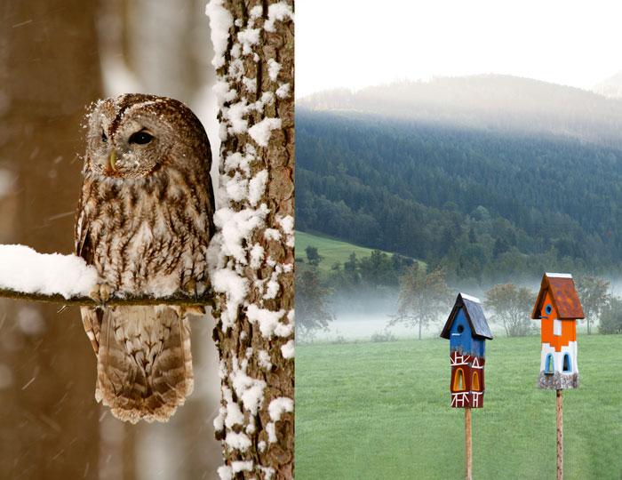 Waldkauz und Vogelhaus