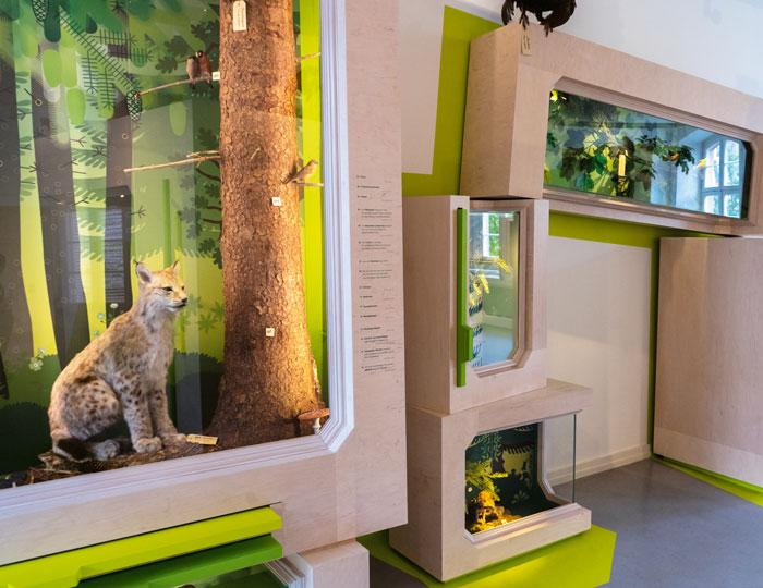 Ausstellung Museum Natur Mensch Tier
