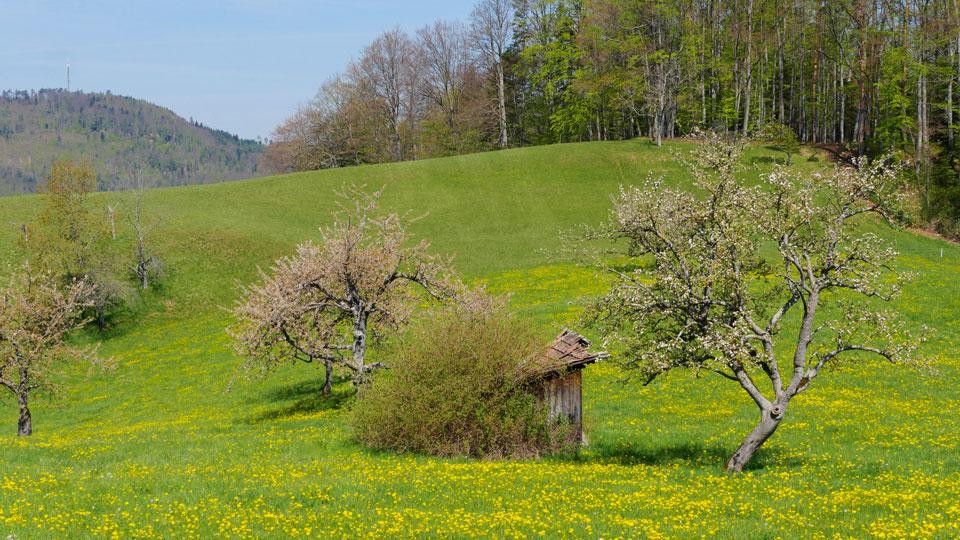 Wiesen in der Schweiz