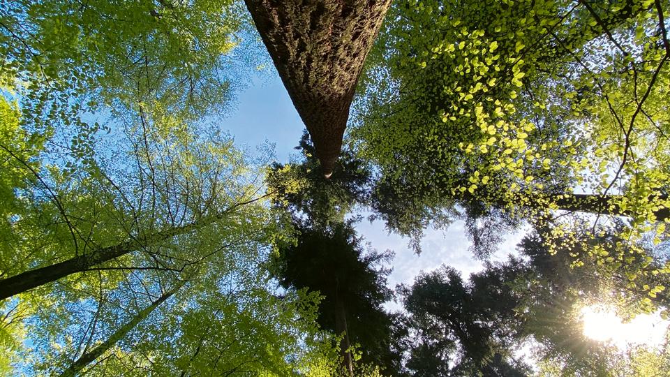 Baum Waldtraud