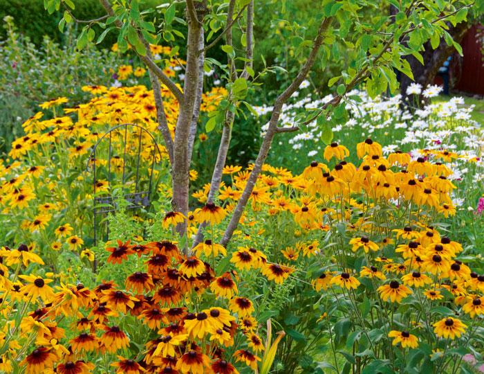 Beet mit Stauden und Sommerblumen