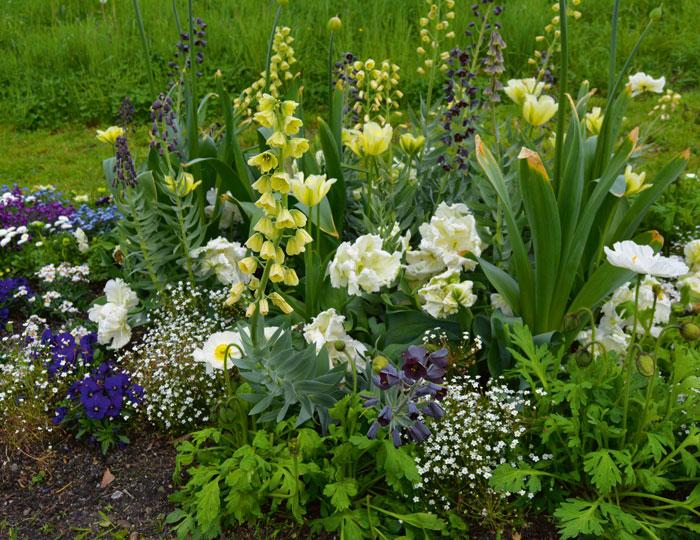 Bodensee Landesgartenschau Blumen