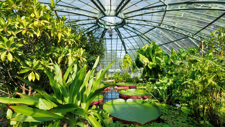 Kuppel des Botanischen Gartens in Basel