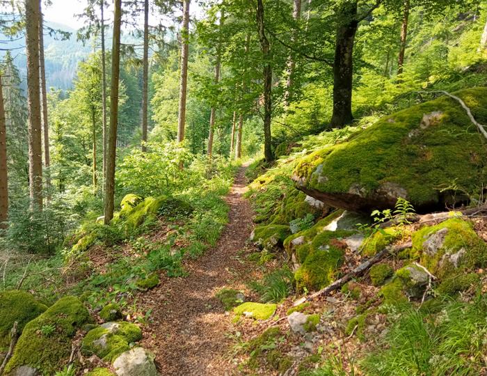 kleiner, schmaler Wegpfad durch ein Waldstück