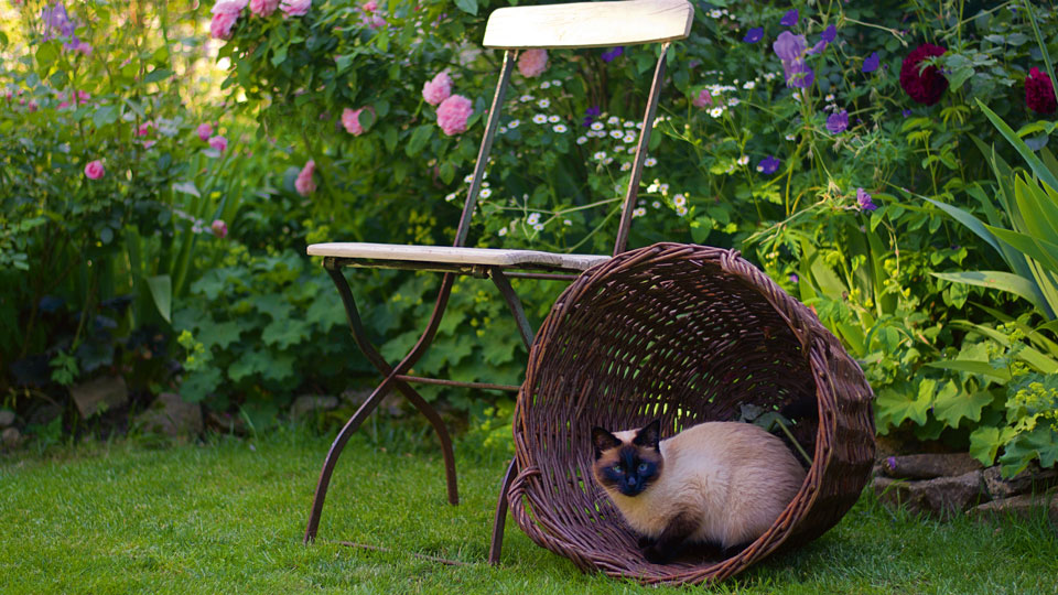 Katze macht in einem Korb eine Pause mit dem Garten im Hintergrund