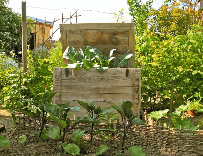 Kohlrabi-in-der-Hochbeet-Kiste