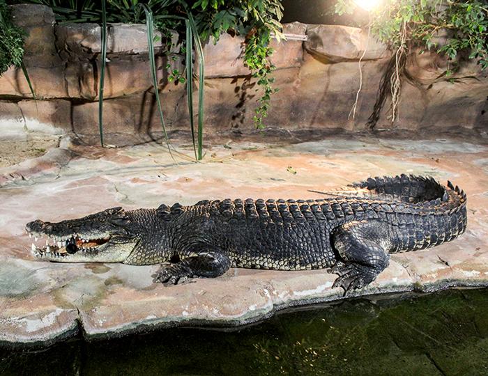 Krokodil in der Wilhelma