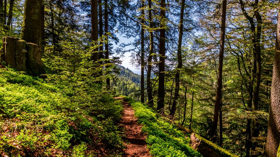 Wald mit Weg