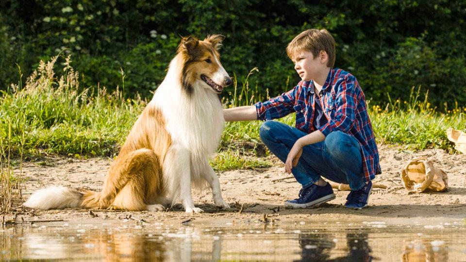 Hund Lassie und ihr Bester Freund