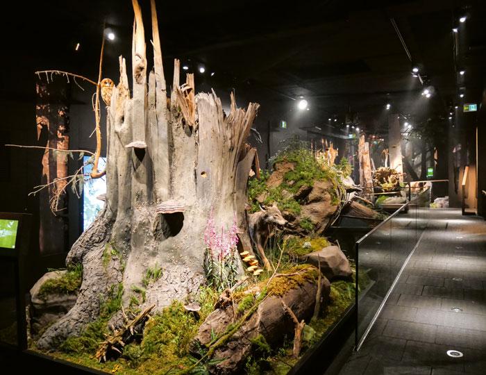 Pilze und andere kleine Sachen der Dauerausstellung