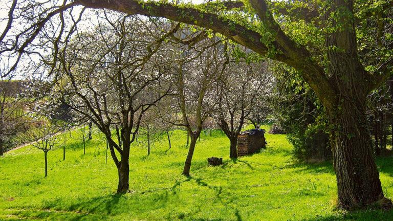 Obstbaumblüte Geopfad