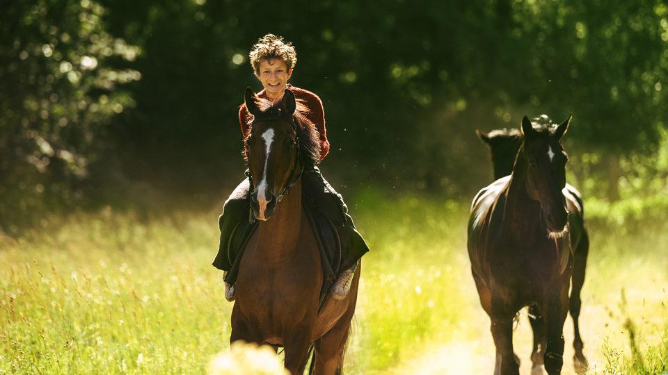 Cover des Films Pferde stehlen
