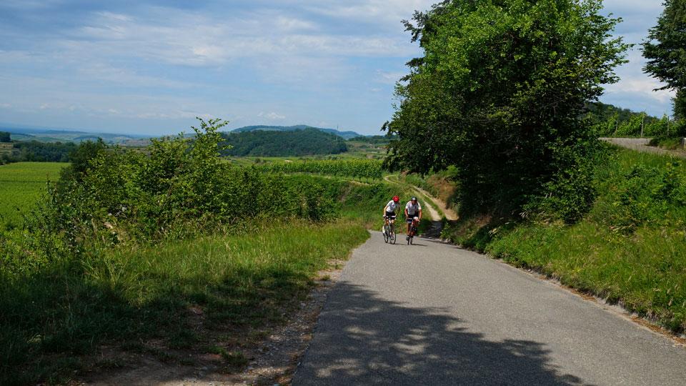 Radweg zwischen Weinreben