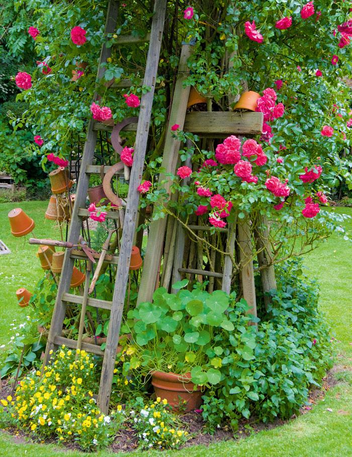Rondell-mit-Ramblerrose