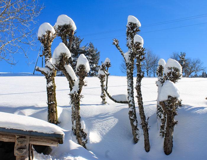 Schneelandschaft Baumstämme