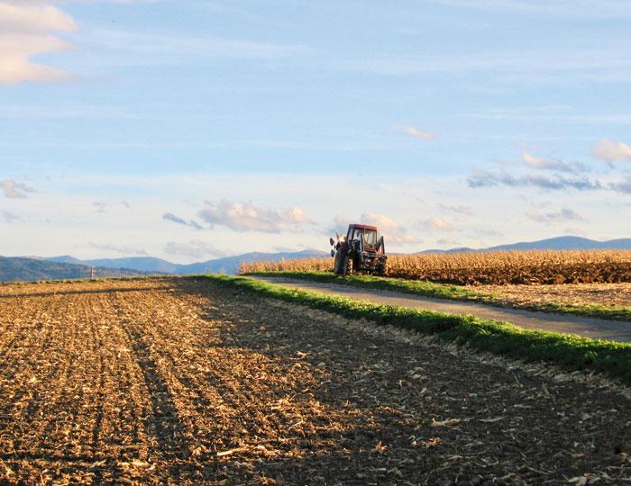 Traktor auf Feld