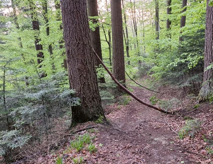 Wald Rosskopf