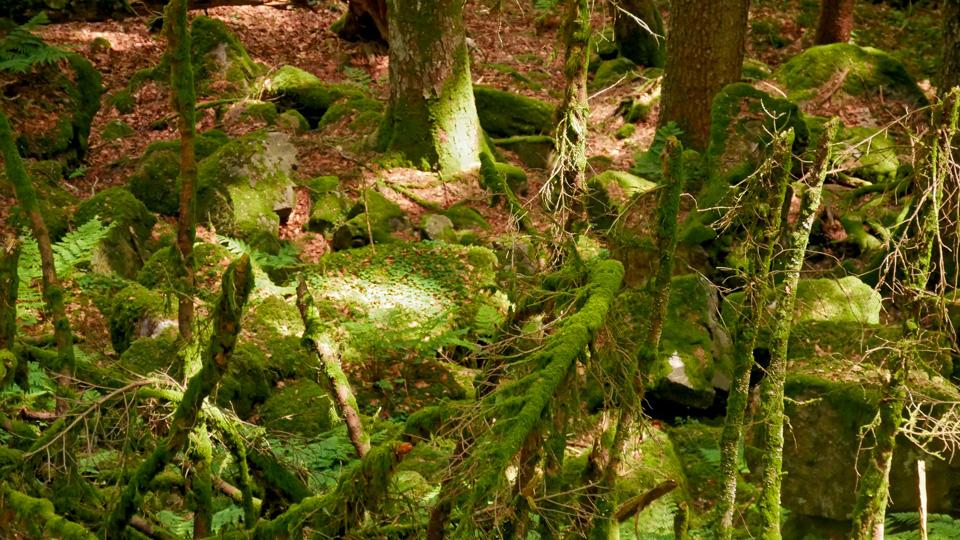 Wald mit Moos