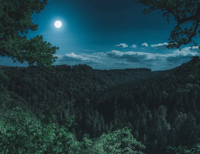 Nachtaufnahme vom Schwarzwald mit dem Mond im Hintergrund
